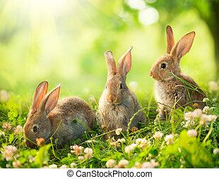 lindo, poco, conejitos, arte, pradera, conejos, diseño,...