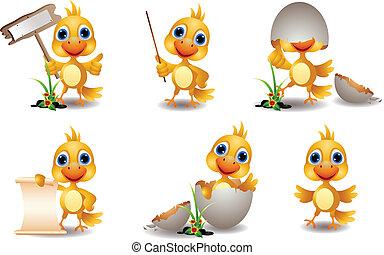 lindo, polluelo, caricatura, colección