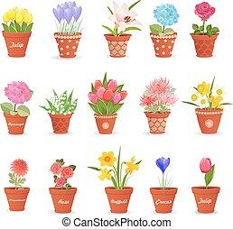 lindo, romántico, des, colección, flores, su, macetas