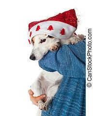 lindo, russell, brazos, gato, sombrero, navidad