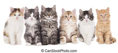 lindo, seis, lado, gatito