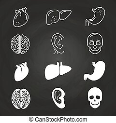 Line and outline white human organs