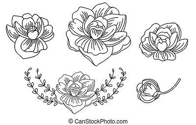 Line art vector set of peonies flowers