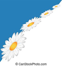 Line of Chamomile on the sky