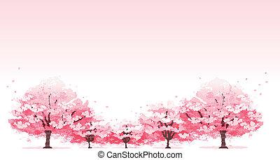 Line of cherry blossom tree background