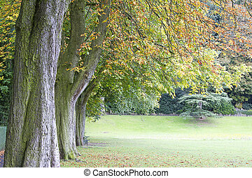 Line of chestnut trees in autumn foliage