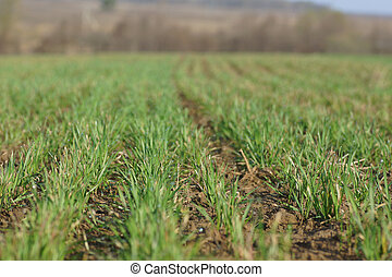 line of grass in the field
