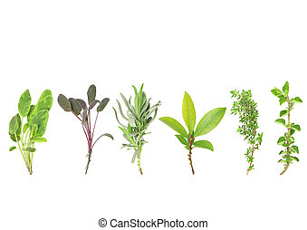 Line of Herbs - Organic leaf herb selection of variegated...