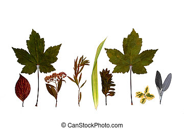 Line of Leaves