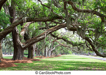 Line of Oak LImbs Over Lawn