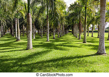 line of palm trees in the park