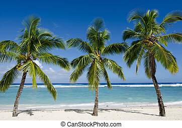Line of three coconut palm trees at Titikaveka beach in Rarotonga Cook Islands during sunset.