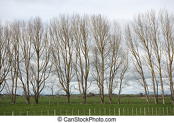 Line of trees behind a fence in a meadow