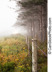 Line of trees in the mist - Line of trees and fence in the...