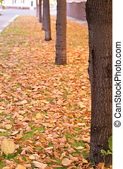 Line of trees on the autumn avenue.