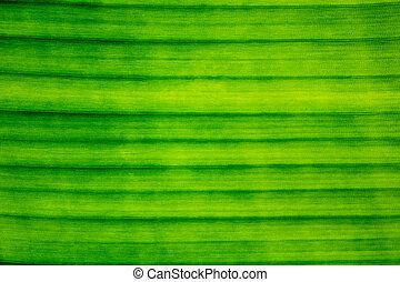 Line, Texture, Pattern of Banana Leaf