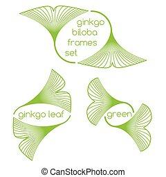 lineal, biloba de ginkgo, hojas, marcos, blanco, plano de fondo