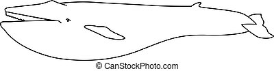 lineal, book., mamífero, imagen, azul, -, vector, colorido, dibujo, mamífero marino, illustration., ballena, outline., mano, más grande, coloring.