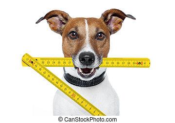 lineal, falten, hund, gelber , heimwerker