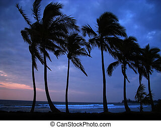 A stunning blue sunset highlights the silhouette of coconut palms, swaying in the tropical breeze along the shores of Haleiwa, Hawaii (North Shore).