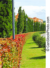 lined., arbre, jardin anglais