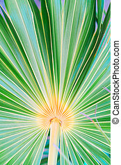 Lines and textures of green palm leaves