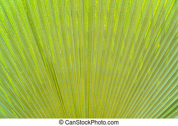 Lines and textures of Green Palm le