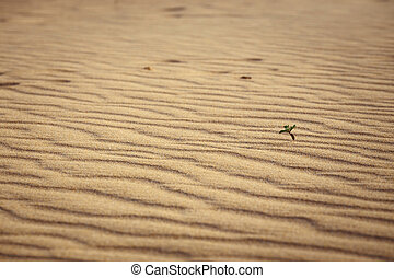 Lines in the sand of a beach, close up