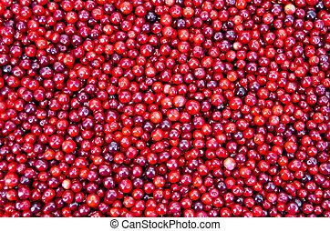 lingonberry, beschaffenheit