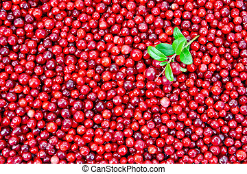 Lingonberry with sprig texture - Texture of ripe red berries...