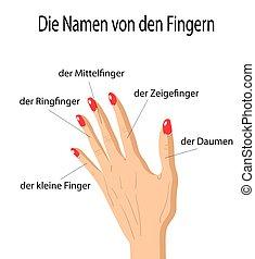 linguaggio gestuale, tedesco, dita, illustrazione, parti, vettore, nomi, umano, cartone animato