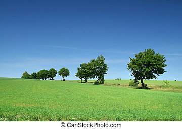 linha, borda, prado, árvore