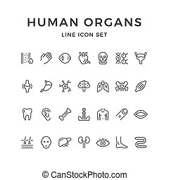 linha, jogo, órgãos, human, ícones