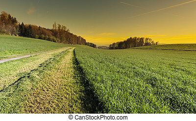 linie, grass., mähen
