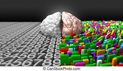 links, hersenen, &, rechts, hersenen