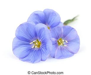 lino, fiori