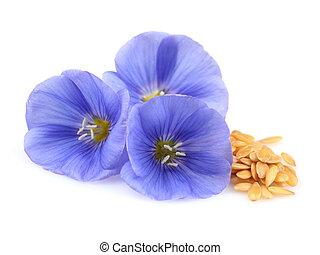 lino, fiori, con, semi