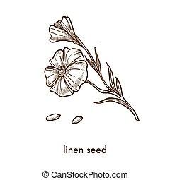 lino, semilla, y, flor, en, delgado, tallo, monocromo, bosquejo