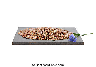Linseed and common flax on slate isolated