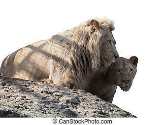 Lion and lioness couple of lovers at the top of mountain isolated on white