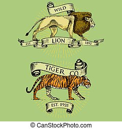 Lion and tiger logos, emblems or badges with wild animals and banners or ribbons in vintage, retro old style, hand drawn engraving. sketch