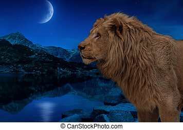 Lion at the night lake under the moon and stars wallpaper