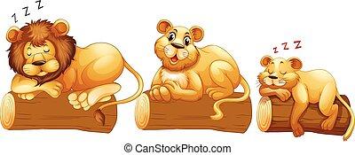 lion, bûche, famille