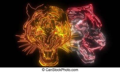 lion, combiné, faces, tiger., vidéo
