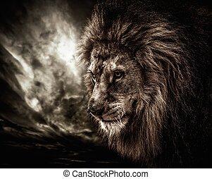 lion, contre, ciel orageux