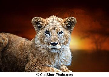 Lion cub on savanna landscape background and Mount Kilimanjaro at sunset