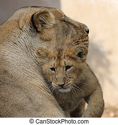 Lion cub with mom