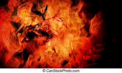 Lion Eats Meat In Fire Abstract