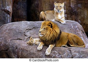 Lion Family - Lion, lioness, and cub