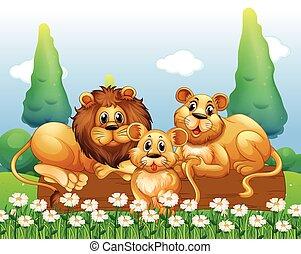Lion family resting in the garden